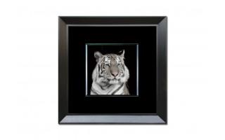 Obraz szklany 80x80 Głowa tygrysa (260357)