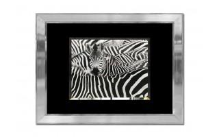 Obraz szklany 80x60 Zebry (260350)