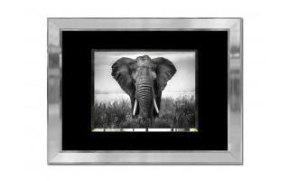 Obraz szklany 80x60 Słoń