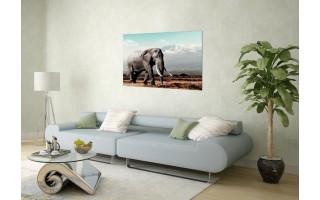 Obraz szklany 120x80 Słoń afrykański (260281)