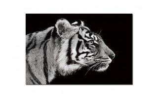 Obraz szklany 120x80 Tygrys (260276)