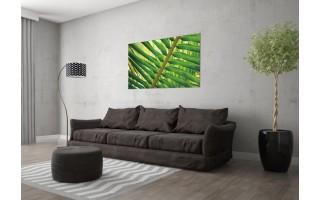 Obraz szklany 120x80 Liść Areka