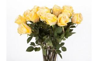Róża żółta 75cm