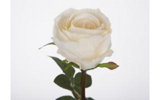 Róża biała 63cm