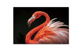 Obraz szklany 120x80 Egzotyczny ptak