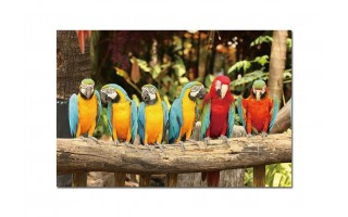 Obraz szklany 120x80 Papugi PROMO