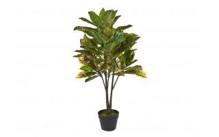 Roślina doniczkowa Kroton zielony 100cm PROMO