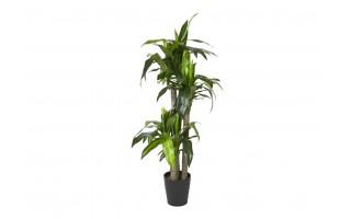 Roślina doniczkowa Dracena 150cm (sztuczna)