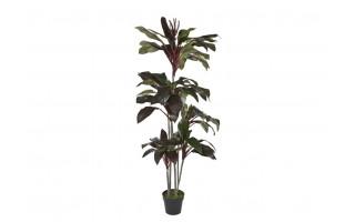 Roślina Kordylina drzewiasta 180cm (sztuczna)