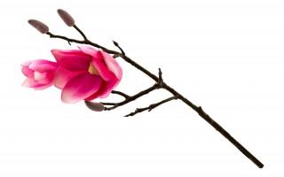 Magnolia mała kwiat sztuczny