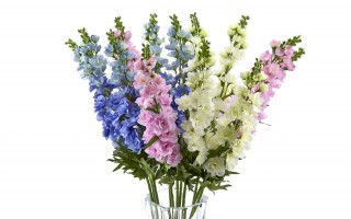 Lewkonia 70cm kwiat sztuczny